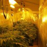 Home Grow Room Design Lemonjack