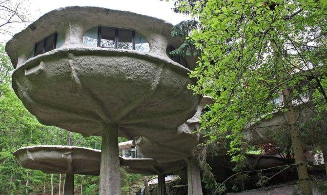 House Week Mushroom Zillow Porchlight