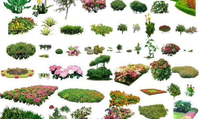 Landscape Plants Shrubs Collection Architectural Resources Arch
