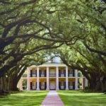 Mille Fiori Favoriti Oak Alley Evergreen Plantations