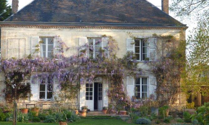 Wisteria Blooming Fragrant French Country Home